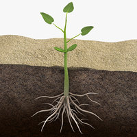Plant Grow with Roots Animated Scene