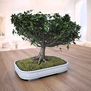 3D american elm bonsai tree