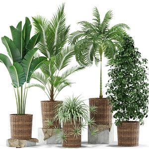 plants 356 3D model