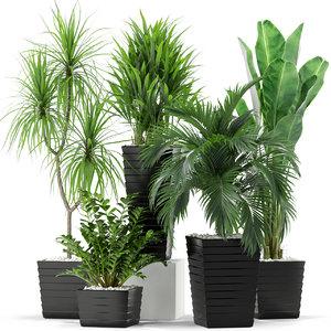 3D plants 371