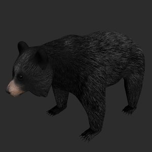 black bear rigged 3D model