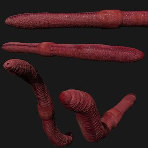 earthworm rigged 3D