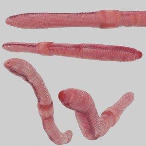 3D earthworm rigged model
