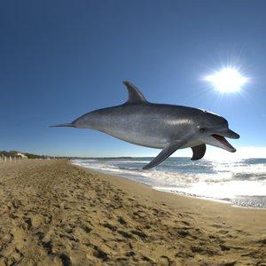 3D model bottlenose dolphin
