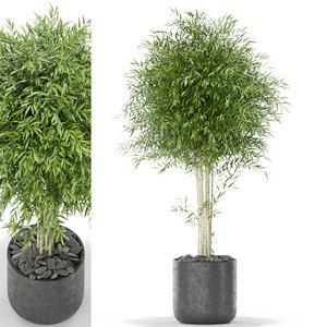 3D bambusoideae bamboo flower model