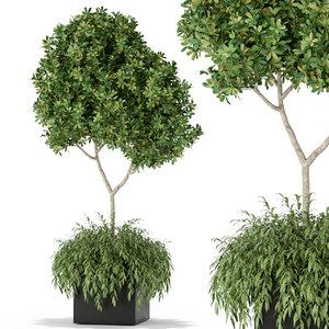 3D dracaena ficus flower model