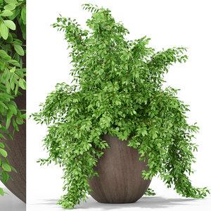 plants 391 3D