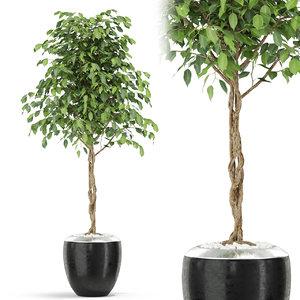 plants 404 3D
