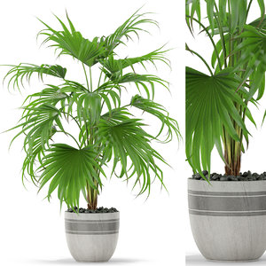 3D plants 408