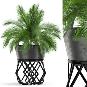 plants 411 3D model