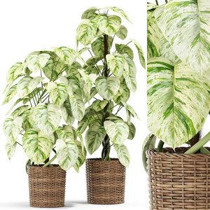 plants 417 3D model