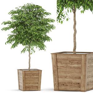 plants 418 3D