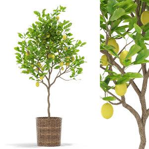 3D plants 421