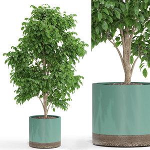 plants 425 3D model