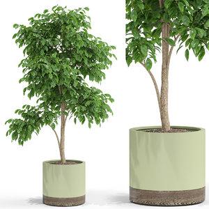 plants 426 3D