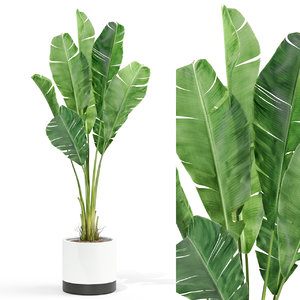 plants 427 3D model