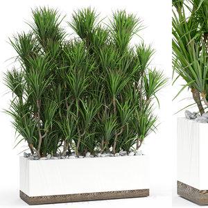 dracaena flower plant model