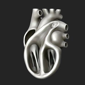 3D heart human sculpt