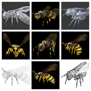 wasp bee rigged model