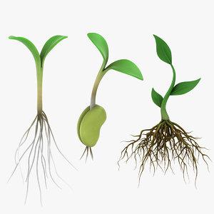 3D model plant roots