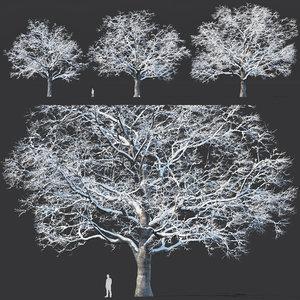 oak trees model