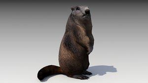 3D model marmot