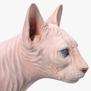 cream sphynx cat rigged 3D model