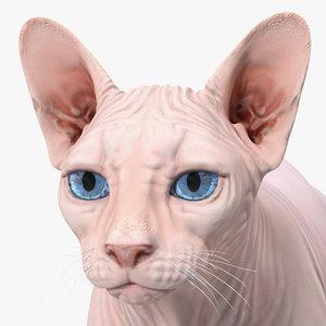 cream sphynx cat rigged model