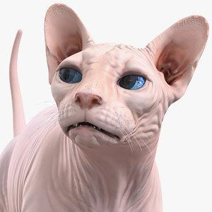 3D cream sphynx cat rigged