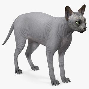 3D sphynx cat solid color model