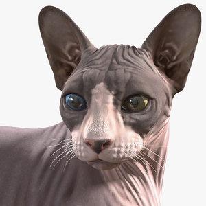 sphynx cat heterochromia rigged 3D