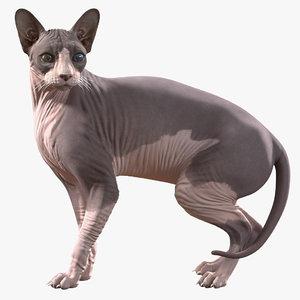 3D sphynx cat heterochromia rigged model