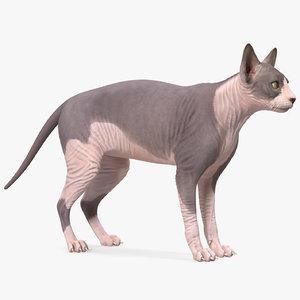 sphynx cat heterochromia rigged 3D model