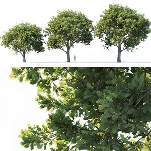 oak trees 3D