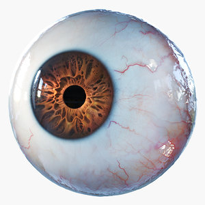 3D human eye rigged eyeball model