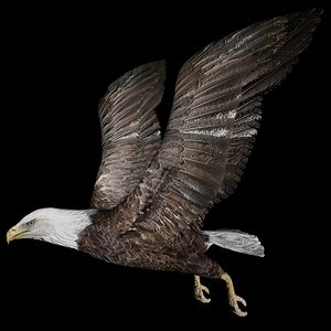 eagle rigged 3D