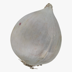 onion white 02 raw 3D model