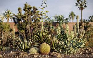 3D tropical desert plant includes model
