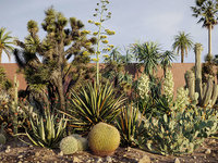 Tropical desert plant collection