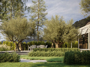 3D olive tree - growfx