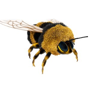 bumblebee cartoon 3D model