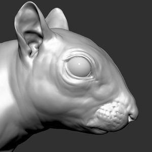 3D squirrel zbrush