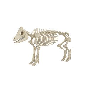 3D pig skeleton