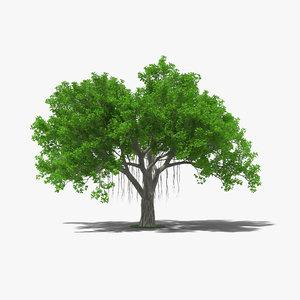 banyan tree 3D model
