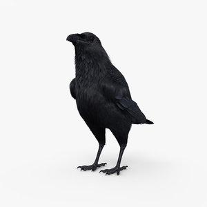 raven animal nature 3D model