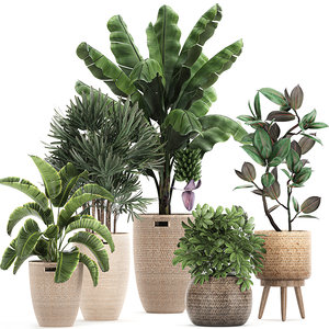 ornamental plants rattan baskets 3D model