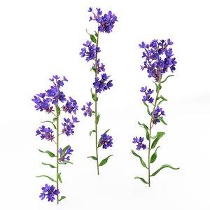 anchusa officinals plants 3D model