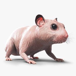 hamster animal rodent model