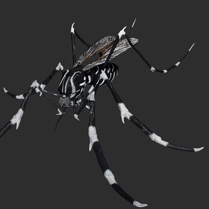 mosquito rigged model