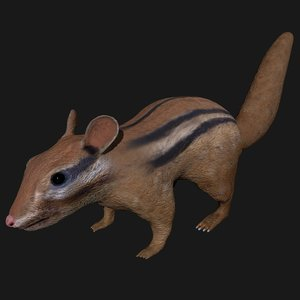 3D indian squirrel rigged
